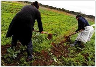 Bolivianos exitosos en tierras argentinas