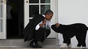 Tener perros en el lugar de trabajo puede contribuir al rendimiento de los empleados y a su satisfacción.