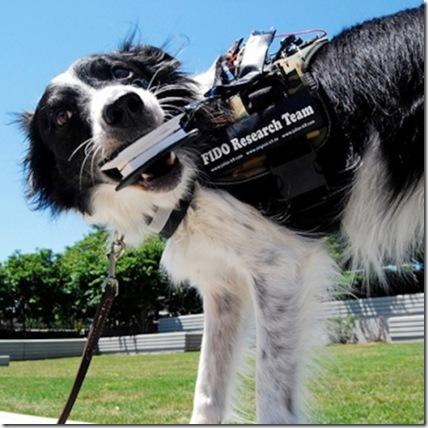 FIDO: Tecnología de Google Glass para comunicarse con perros