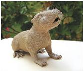 Fósil de ratón de Chuquisaca es de interés científico