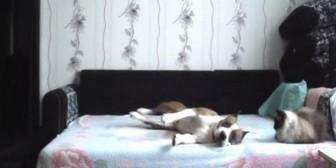 Perro desobedece y es descubierto por cámara escondida. Míralo