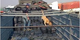 Canes de Aduana boliviana detectaron 4,2 millones de dólares y 1,1 millones de euros no declarados
