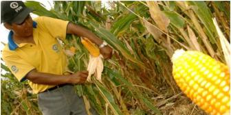 FAO pone de ejemplo a Bolivia y a Brasil en seguridad alimentaria