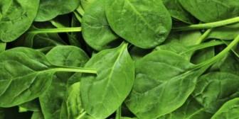 ¿Cuáles son las bondades de la espinaca?