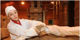 Caen precios de los nuevos 'granos de oro': chía, quinua y sésamo