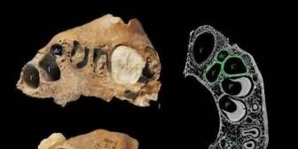 Encuentran restos fósiles humanos imposibles de clasificar