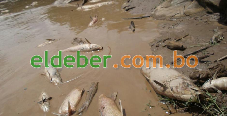Aparece un centenar de peces muertos en río Abapó - eju.tv