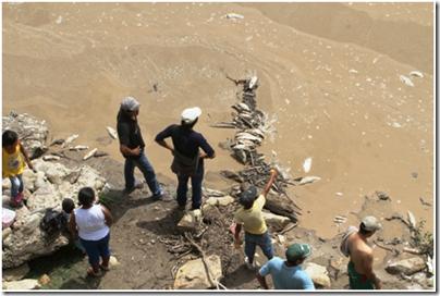 Anuncian investigación sobre la mortandad de peces en Abapó - eju.tv