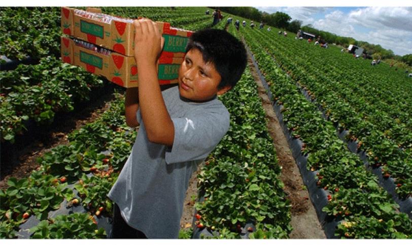 Observación. Según datos del INE, los menores están insertos en casi todas las actividades económicas.