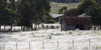 Lluvia de arañas causa terror en Australia