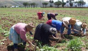 Titulación individual de tierras acaba con la integración en las comunidades, según estudio