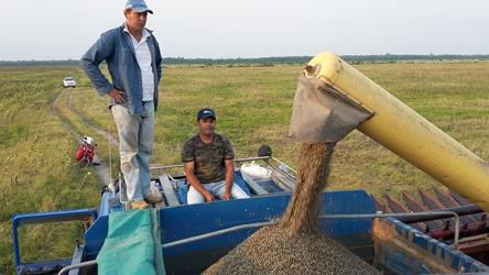 La cosecha de granos avanza en el campo