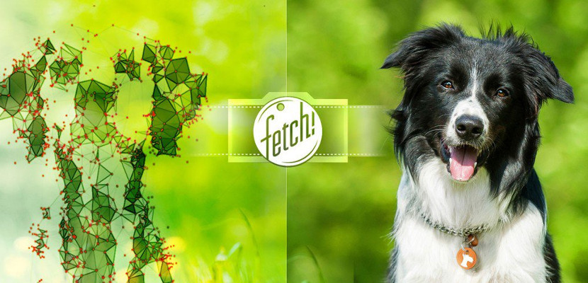 Fetch Fetch!, la nueva app de Microsoft para iOS
