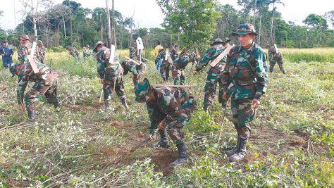 Destrucción. Efectivos de la Fuerza de Tarea Conjunta (FTC) erradican coca excedentaria en Villa Nueva, trópico cochabambino.