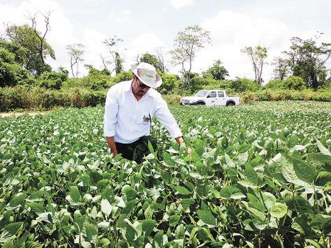 Un productor revisa y hace el control del crecimiento de la soya en un sembradío del norte cruceño. Foto: Aline Quispe