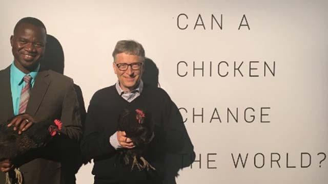 -bill-gates-chicken