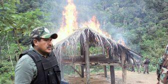 En Bolivia, siete mil operativos incautaron 121 ton de droga en ocho meses