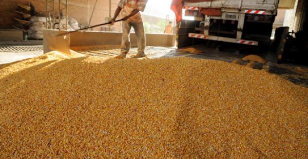 el negocio del maiz esta bueno