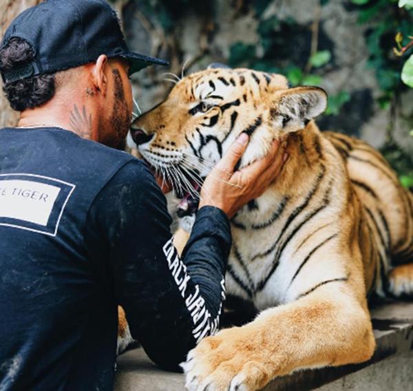 """""""Nicole"""", es el tigre favorito de Lewis Hamilton (Instagram)"""
