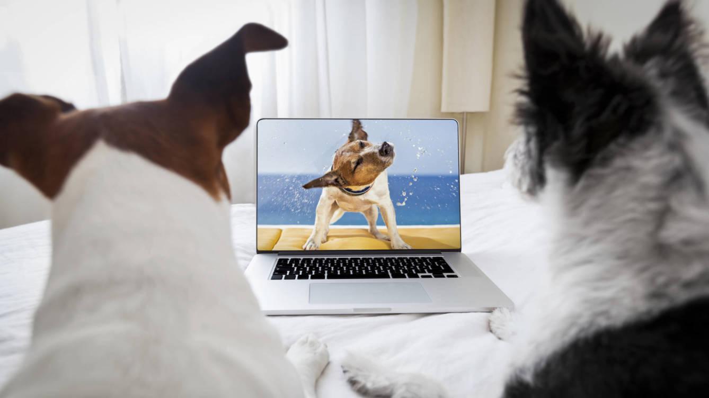 Foto: Los perros sí que pueden ver la televisión, pero no lo que tú ves. (iStock)