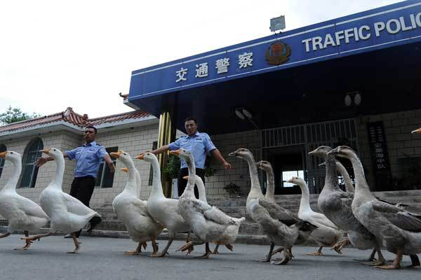china-gansos