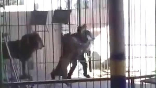 León mata a su domador durante un show infantil