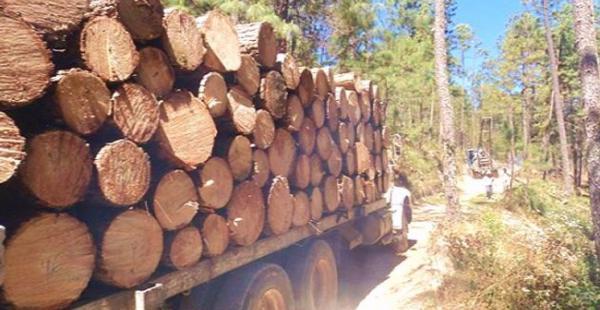Las rutas que se usan para el desplazamiento de la madera se utilizan, además, para desplazar otros bienes ilícitos, como drogas o armas