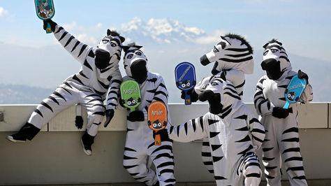 Las cebras ya se convirtieron en patrimonio de la ciudad de La Paz.