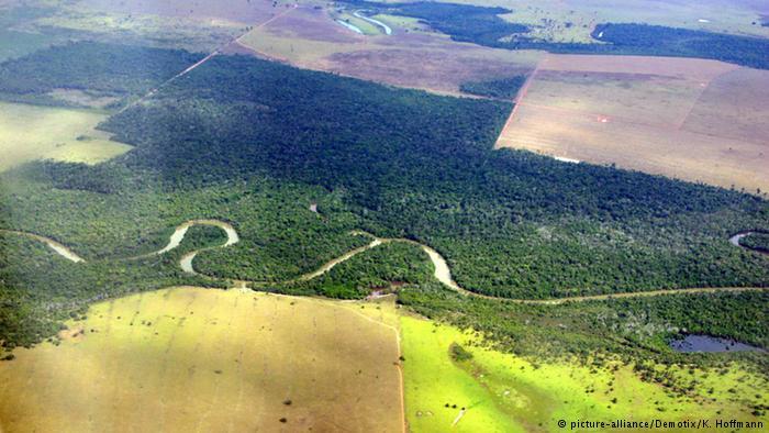 Brasilien Entwaldung des Urwaldes (picture-alliance/Demotix/K. Hoffmann)