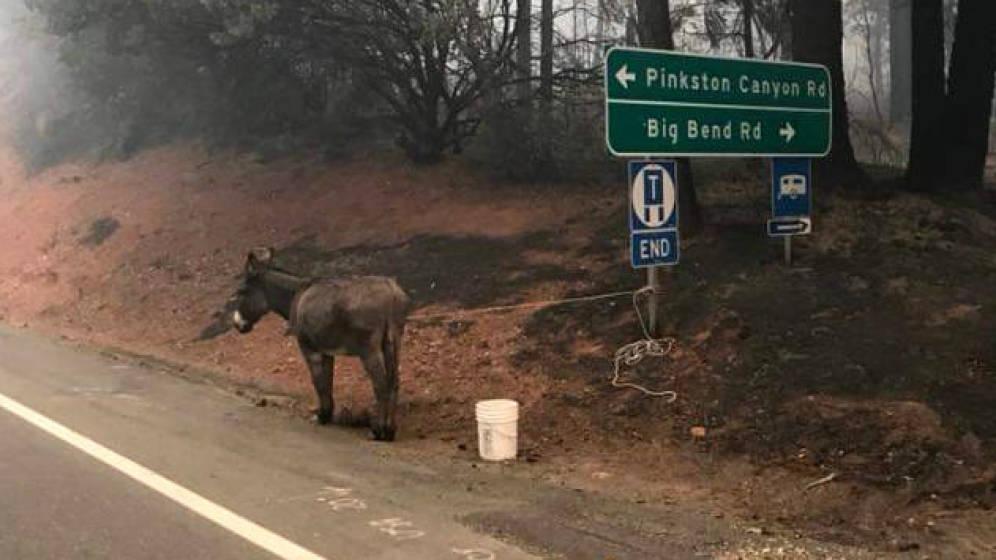 Foto: Un burro, rescatado de una finca arrasada por el fuego (Foto: Twitter)