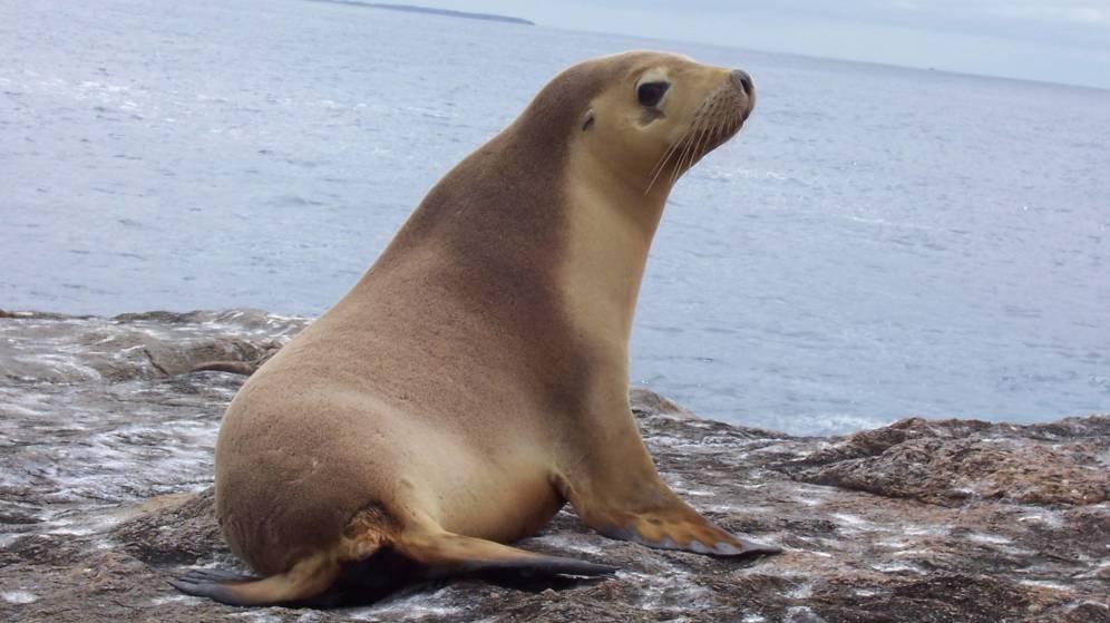 Foto: Los leones marinos, atacados con armas de fuego en Estados Unidos