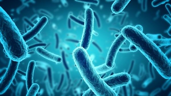 Un estudio encontró restos de 10 bacterias en pantallas táctiles de McDonald's en Reino Unido (Foto: iStock)