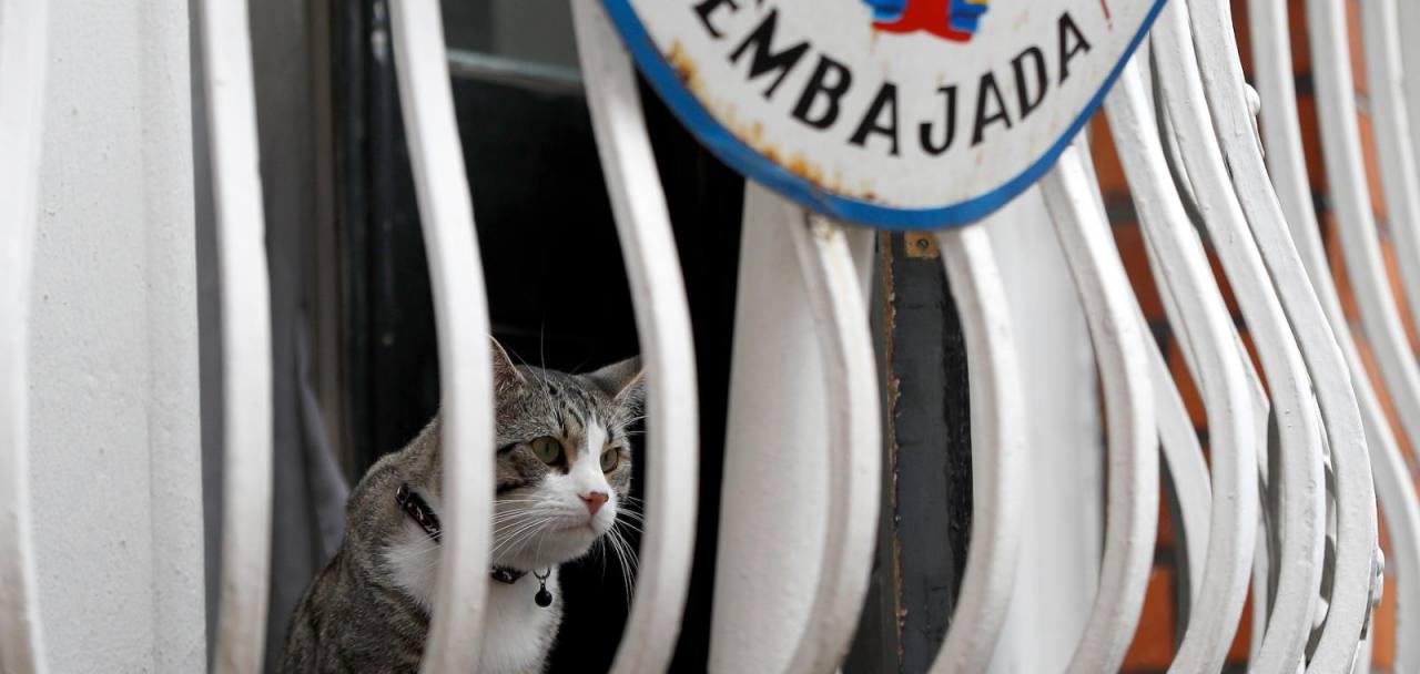 El gato James no estaba en la embajada de Ecuador cuando Julian Assange fue detenido
