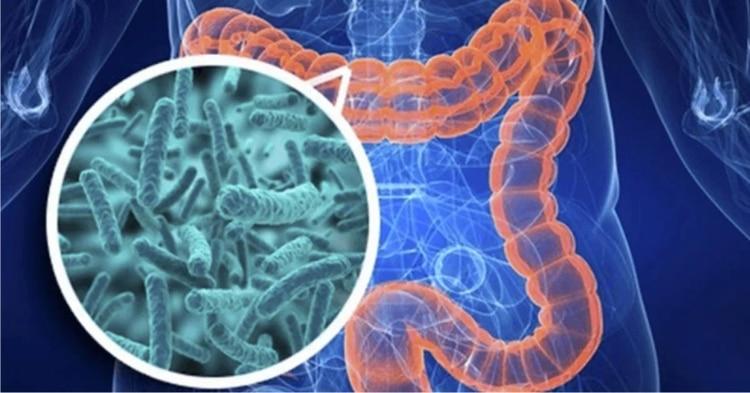 """La microbiota intestinal """"es fundamental en diversas funciones del organismo"""" como en la regulación del metabolismo energético, la maduración del sistema inmunológico Foto: Especial"""