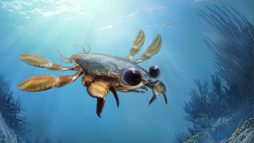 Descubren un cangrejo prehistórico que arroja nuevas pistas sobre la evolución
