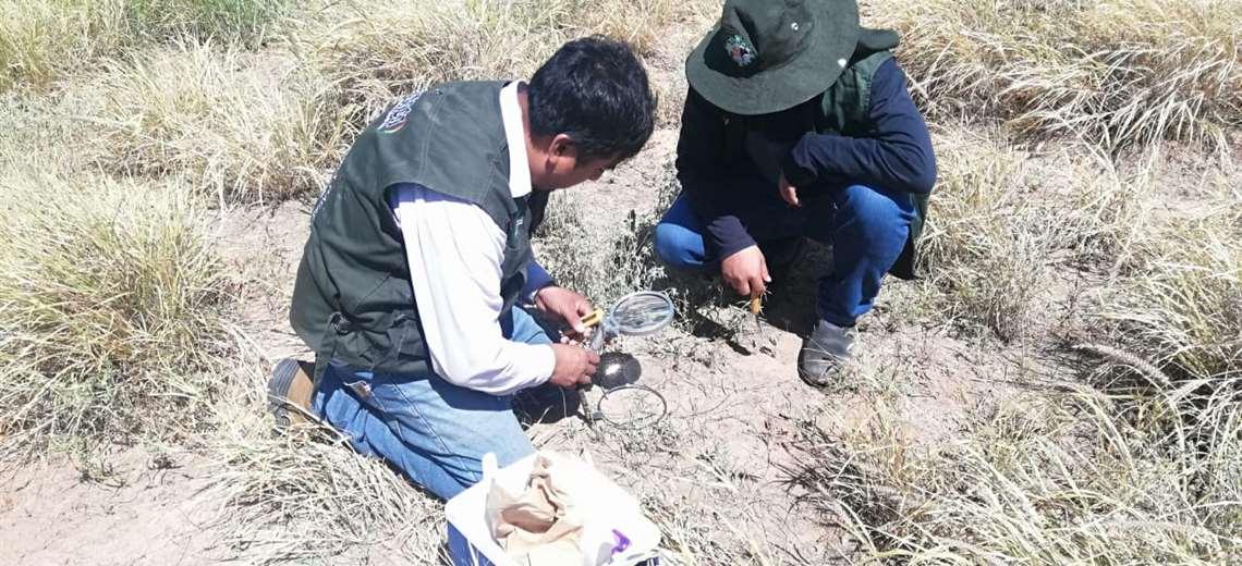 Control y monitoreo de la langosta voladora en Orillas del Kaa Iya, frontera con el Paraguay
