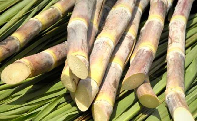 Caña-de-Azúcar-Foto-Mercado-Azúcar