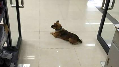 El personal del hospital comentó que el perro no se movía de la entrada, esperando a su dueño