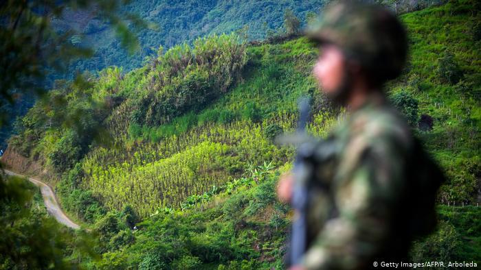 Kolumbien Koka-Plantage in Briceno (Getty Images/AFP/R. Arboleda)