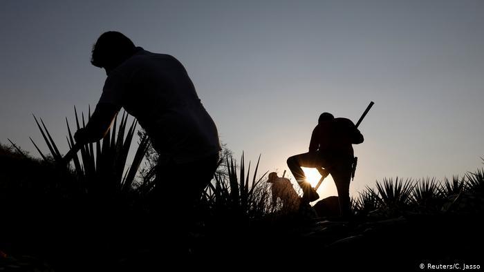 Foto de trabajadores agrícolas en México