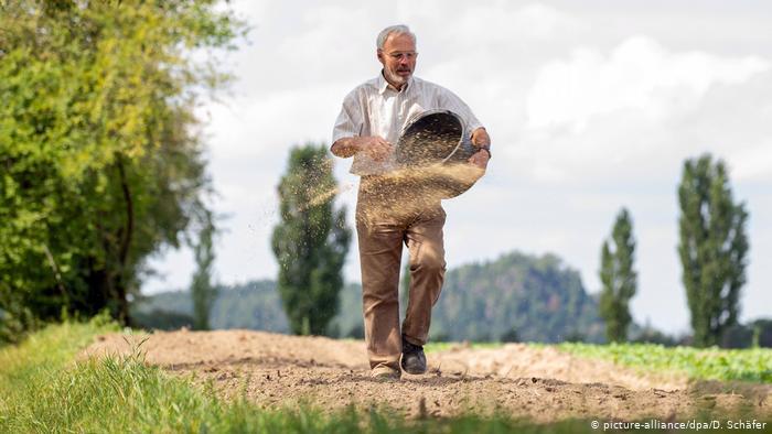 Deutschland Landwirtschaft Feldblumen (picture-alliance/dpa/D. Schäfer)