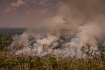 Incendios en la Amazonía de Brasil (© CHRISTIAN BRAGA / GREENPEACE / CHRISTIAN BRAGA)