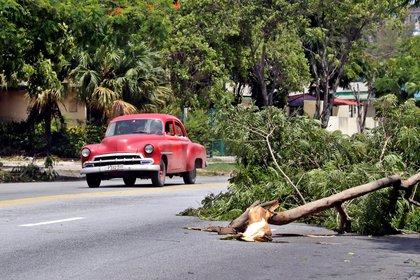 Un auto pasa junto a un árbol caído tras la tormenta tropical Laura en La Habana (Cuba) (EFE/Ernesto Mastrascusa)