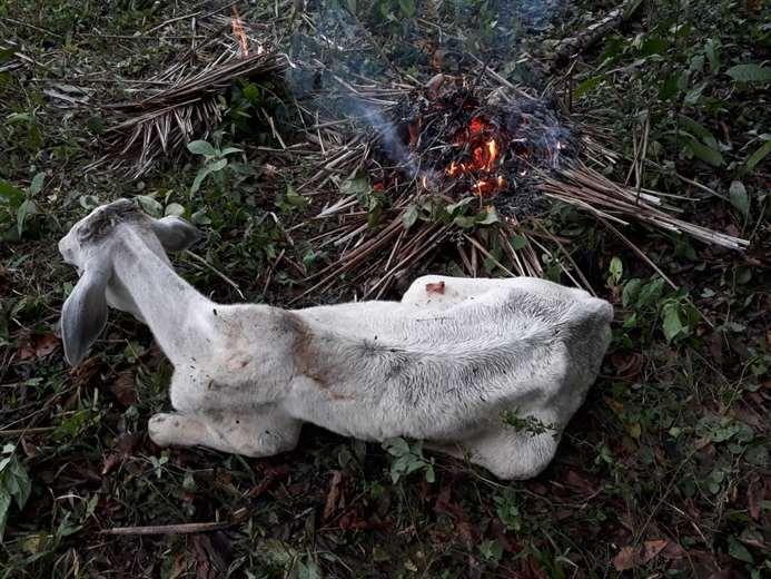 Productores hicieron fuego para atenuar el frío en el ganado /Foto: Alberto Gutiérrez