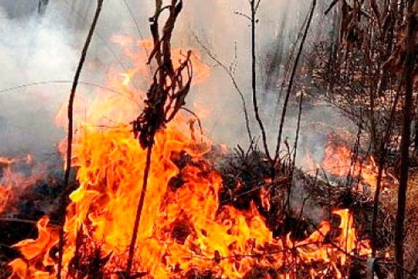 Focos de calor Bolivia /Imagen de referencia/ Foto: AlertaBolivia