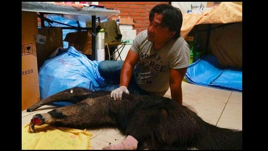 Rojas entregó su vida al cuidado de la vida silvestre