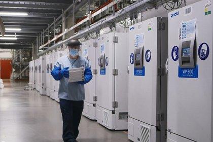 Congeladores almacenan la vacuna en la planta farmacéutica de Pfizer en Puurs, Bélgica (Reuters)