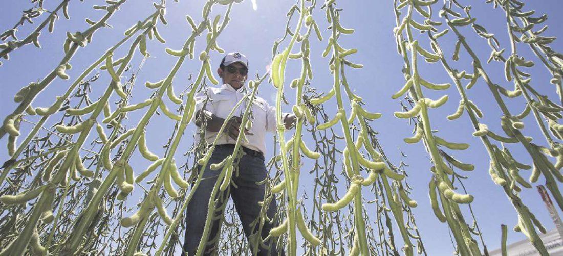 Parada dijo que liberar las exportaciones de soya permitió un superávit comercial luego de cinco años