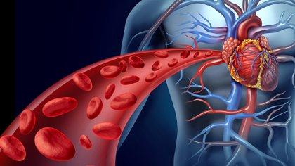 El corazón es uno de los órganos más afectados por la enfermedad multisistémica COVID-19 (Shutterstock)