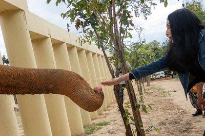 Cher con Kaavan, un elefante que fue transportado desde Pakistán a Camboya (Reuters)